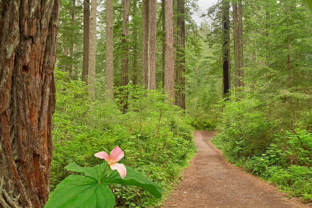 One of the trails in Trione-Annadel State Park